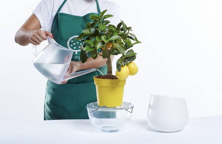 regar a planta 2